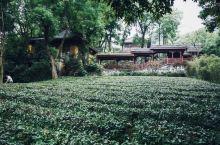 #元旦去哪玩 杭州☀️最具杭州气质的深山密林里的禅寺茶苑