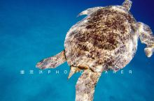 再向前,潜一下,大海龟就在那儿!
