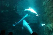 白鲸的世界