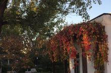 昌平的秋天
