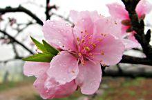 超全攻略丨桃花岛喊你:看桃花,寻良缘咯!超美腻的风景圣地~