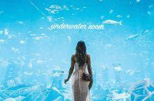 住进海底世界|19万一晚,枕着鱼群入睡的土豪酒店了解一下