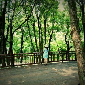 照母山森林公园旅游景点攻略图