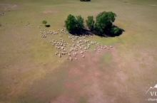 乌兰布统大草原
