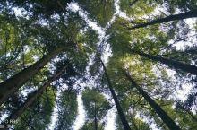 山王坪露营基地。。。在山王坪喀斯特地质公园内。公园分三个区,露营区,石林区,森林区。 交通。自驾。