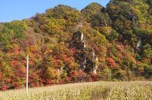 深秋时节!本溪的枫叶就到了最美的观赏期了!