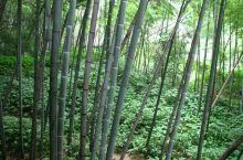 岳麓山,融中国古文化精华的儒、佛、道为一体