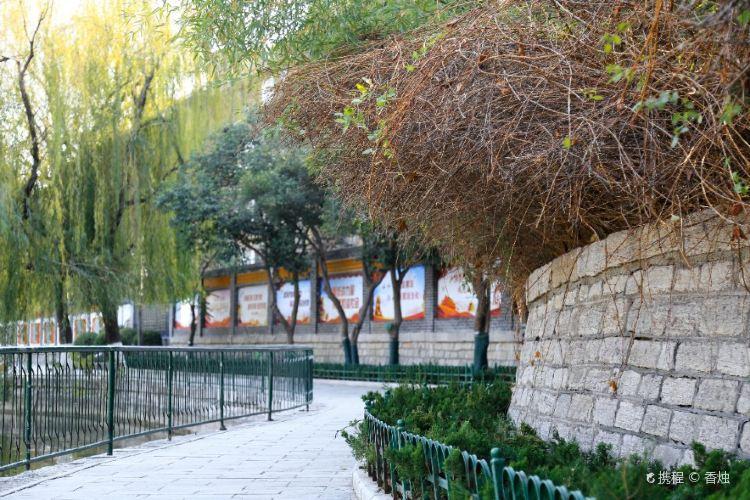 Wuying Tam2