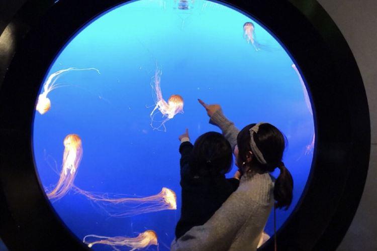 Vancouver Aquarium4