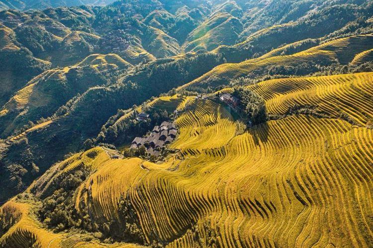 Jinkeng Rice Terraces2