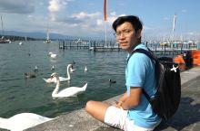 #元旦去哪玩#爱在日内瓦湖!与天鹅一起嬉戏的时光,真美!
