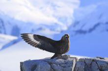 南极游轮打鸟队#向往的生活#