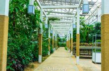 #向往的生活#在小南京村,迷失在热带植物园里