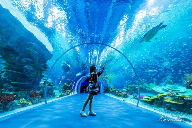 上海海昌海洋公園3