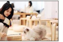猫奴必入!下班就能去打卡的广州高颜值猫咖吸猫攻略,超萌超治愈!