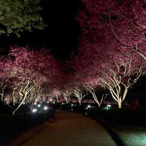永福台品樱花茶园旅游景点攻略图