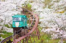 梦幻樱花季终于来了!网友总结史上最全赏樱地,收藏!
