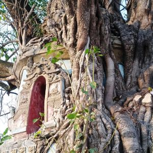 树包塔旅游景点攻略图