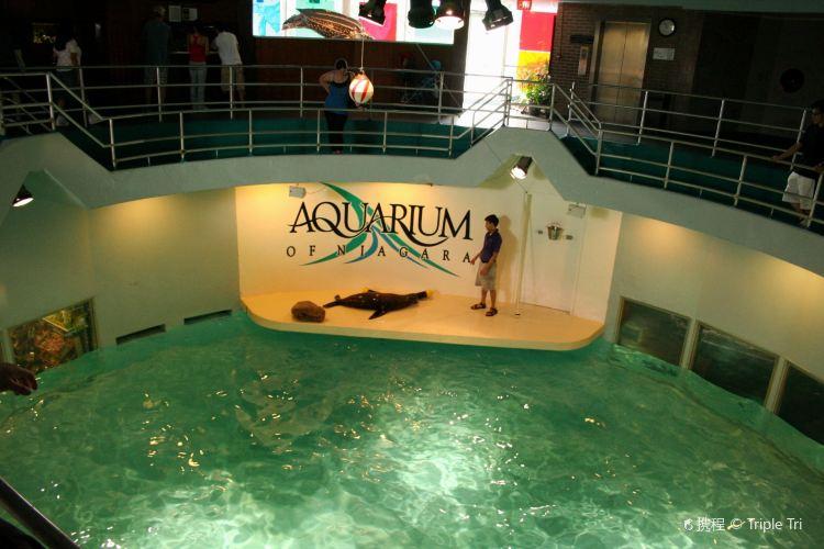 Aquarium of Niagara2