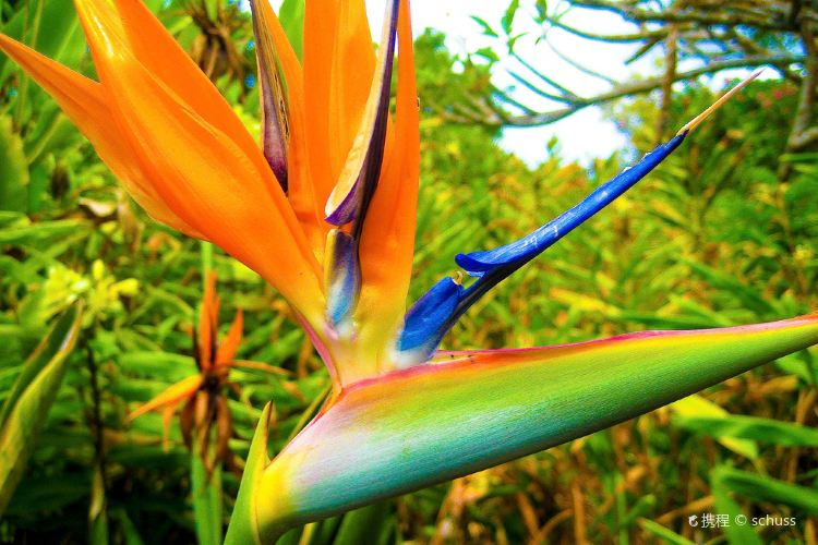Kula Botanical Gardens4
