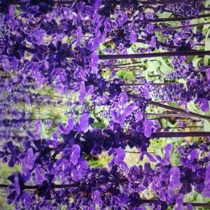 花都香草世界旅游景点攻略图