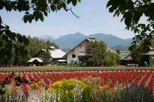 富田农场(Furano Tomita Farm),当地看薰衣草比较有名的农场。农场里有礼品店,全部都