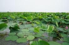 微山湖 微山岛旅游攻略  游记