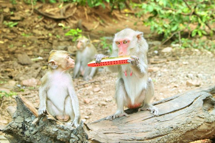 Mt. Emei Natural Ecology Monkey Reserve