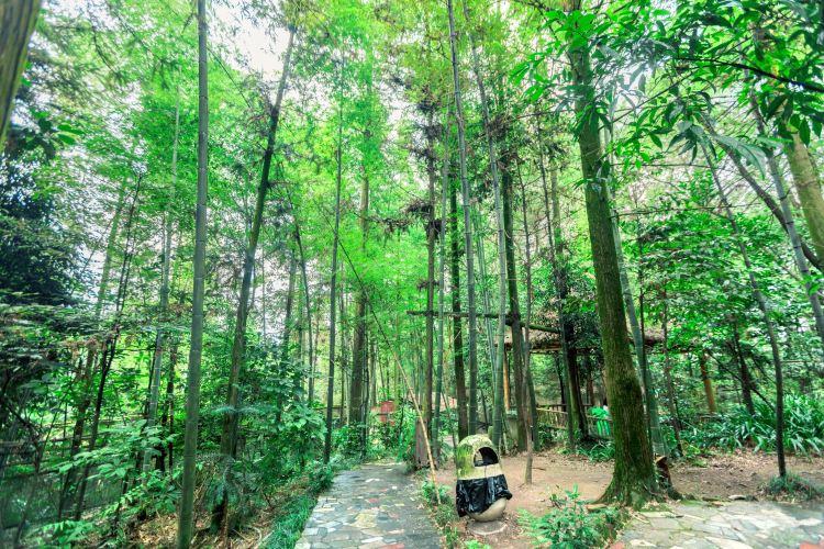 Jinyun Mountain