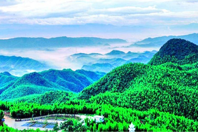 Cailun Bamboo Ocean
