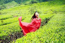 藏在马来西亚的小云南——金马伦高原