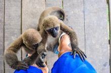 #向往的生活#在亚马逊照顾受伤的动物们