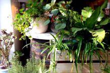 我的秘密花園(一)