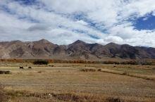 乃村附近的农田