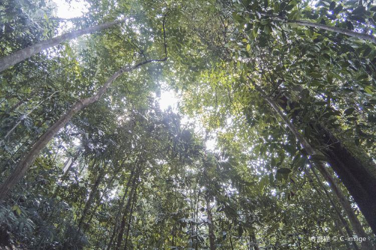 KL Forest Eco Park2