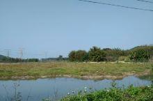 恩平湴朗村湿地