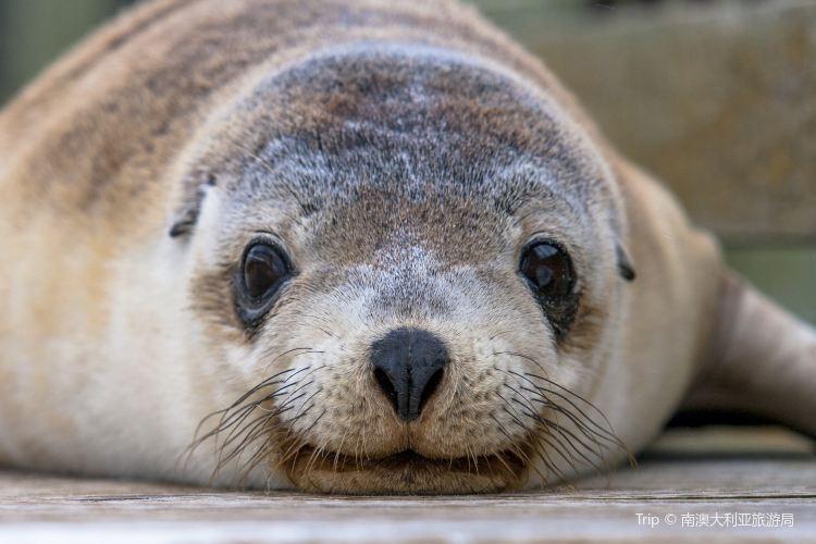 Seal Bay1