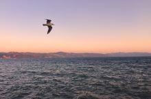 海鸥在天上飞,男孩在地上拍…