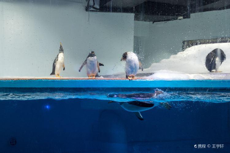 Grandview Aquarium3