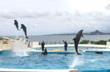 冲绳美丽海水族馆的海豚表演~海豚顶球~棒棒哒👍👍👍