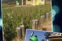 """苏州东山游玩推荐~太湖边的""""青蛙村"""" 一个晴朗的暖冬周末,来到苏州东山太湖之滨的西巷小村落,就像来到"""