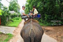 在pai骑大象