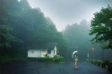 雨季的雾岛 寂静林的即视感