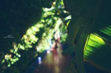 在绿茵掩映中,寻找那抹马约儿蓝