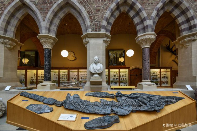 Oxford University Museum of Natural History2
