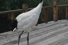 扎龙湿地的鹤