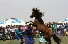 锡林草原那达慕:勇猛的牧人与烈马的较量