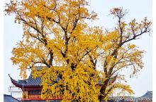 秋在上海古寺
