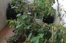 我的后花园