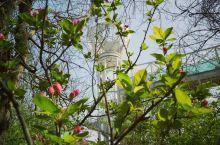潍坊的春——五彩斑斓